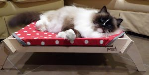 Peach Pet Lounger Product Review
