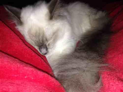 Sophie snuggling