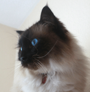 Interview with Little Ragdoll Cat Etsy Seller - Maddy Burrows 7