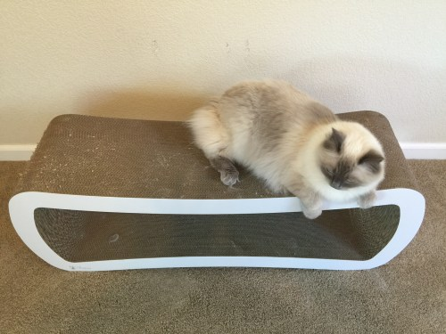 Reader Cat Product Review PetFusion Jumbo Cat Scratcher Lounge 2
