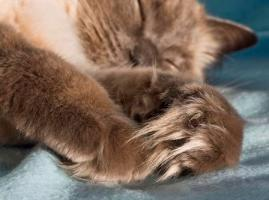 Myst's Paws