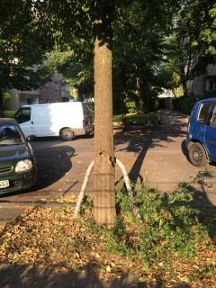 Trockene Baumscheibe in der Görschstraße