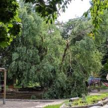 Abgebrochener Ast im Garten der Kita Zipfelmütze.