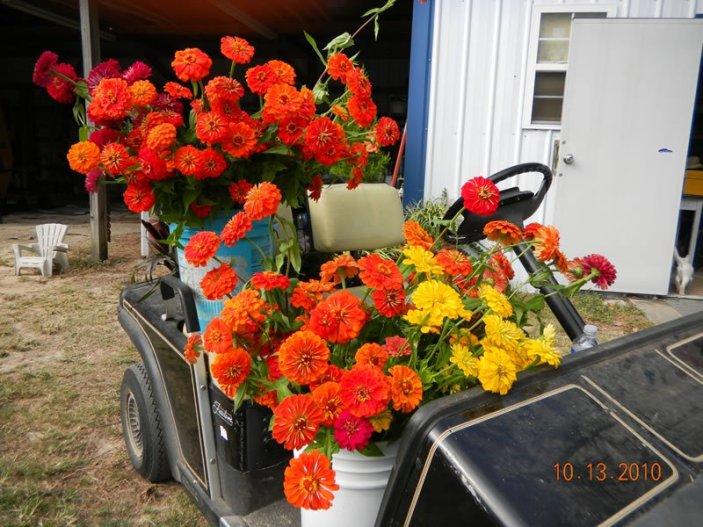 cart-o-flowers