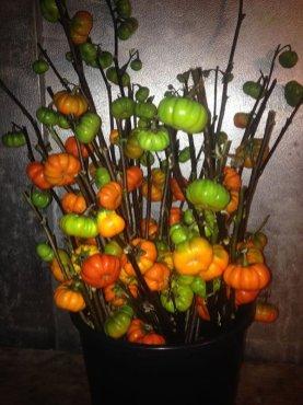 pumpkin-on-a-stick
