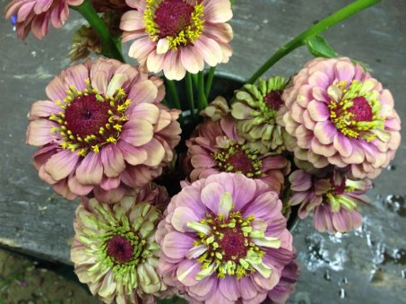 queen-lime-zinnias