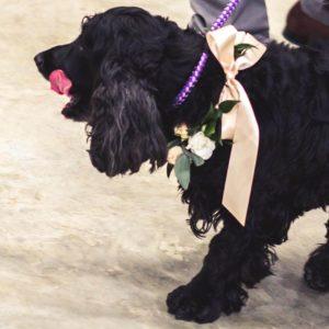 Wedding Flowers Welton Rupert & Hollie Wedding Welton flowers