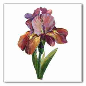 Ceramic wall tile, purple iris flower on a white square background, Product Code B7, Made by Floral Tiles Ltd