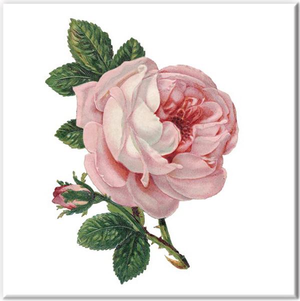 Baby pink rose ceramic wall tile mightylinksfo