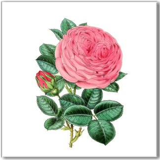 Old-fashioned pink rose ceramic wall tile