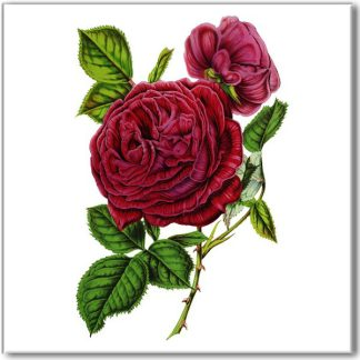 Vintage rose wall tile, maroon red rose with green leaves on a white square background