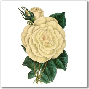 Vintage floral wall tile, cream white rose with green leaves on a white square background
