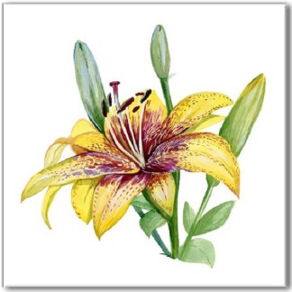 Floral wall tile, yellow lily flower with buds and green leaves on a white square background