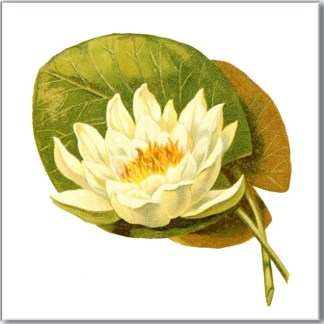 Water Lily Floral Ceramic Wall Tile