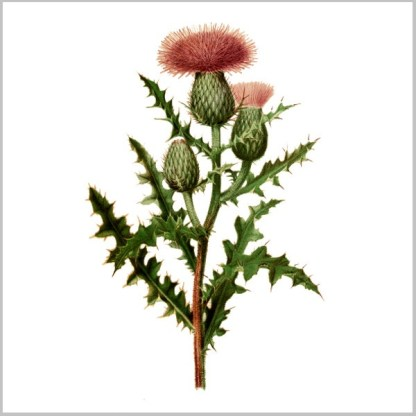 Ceramic wall tile with Thistle flower design