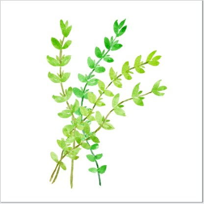Thyme Herb Ceramic Wall Tile
