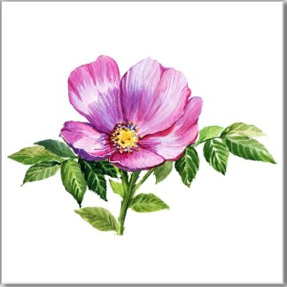 Violet Flower Ceramic Wall Tile