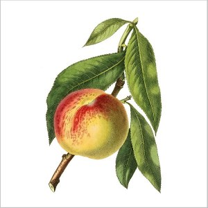 Red apple on a branch with a white square background, ceramic wall tile