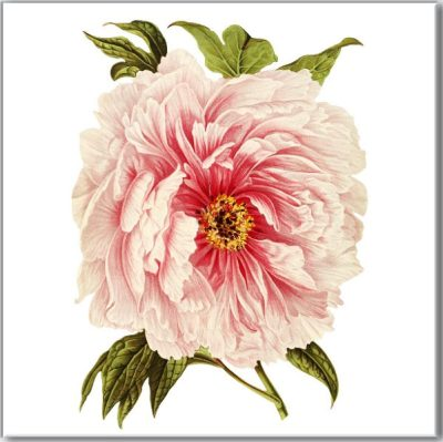 Shabby Chic Tiles - Pink Peony Ceramic Wall Tile
