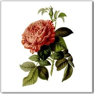 Pink Tiles - Vintage Pink Rose Wall Tile