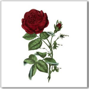 Flower Tiles - Traditional red rose ceramic wall tile
