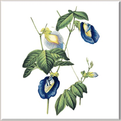 Blue Pea Flowers Ceramic Wall Tile