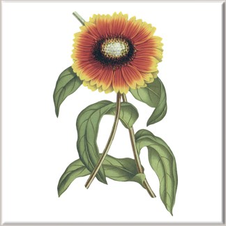 Gaillardia Flower Ceramic Wall Tile