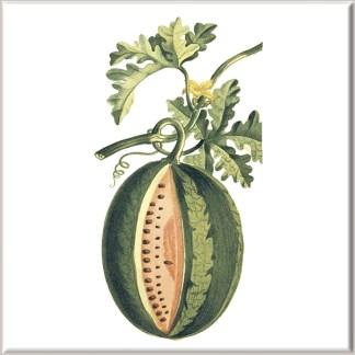 Melon Fruit Ceramic Wall Tile