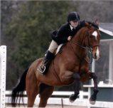 horse-jumping-2