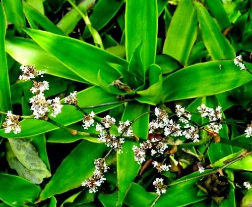 De Con Flores Nombre Plantas