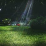 La Importancia De La Luz Y La Sombra En La Composición De Un Jardín