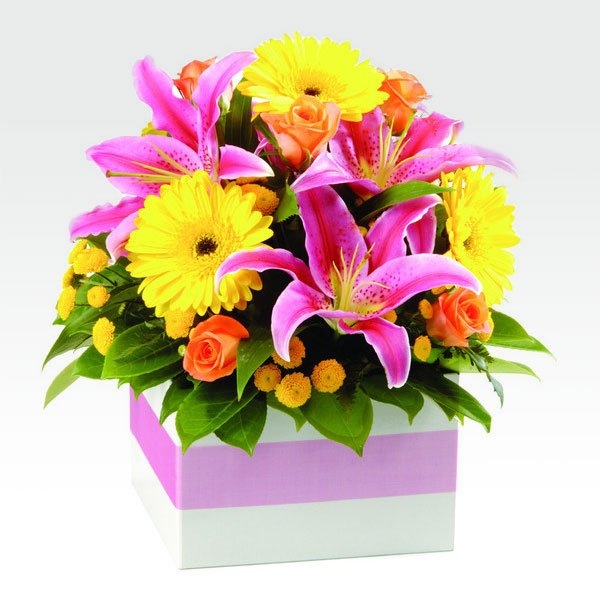 Flowers & Bouquets Harlequin Bright