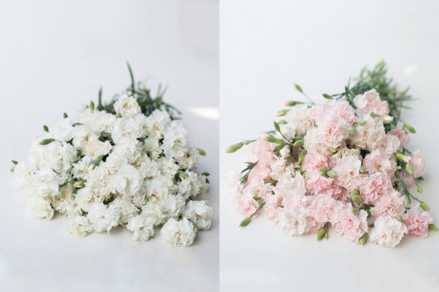 White and pink heirloom carnations