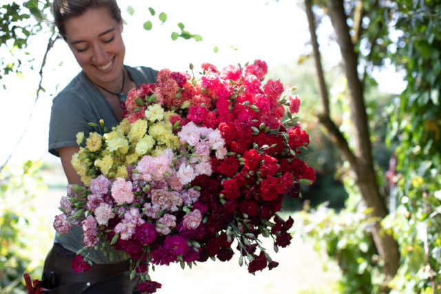 armload of carnations