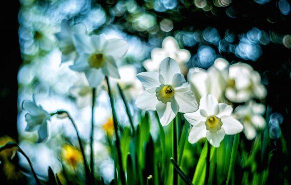 Blumen Pentacon 50mm/1.8