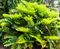 Cardboard Palm Tree