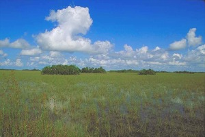 The Everglades Photo: South Florida Water Management District