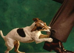 Florida Dog Bite Liability.jpg