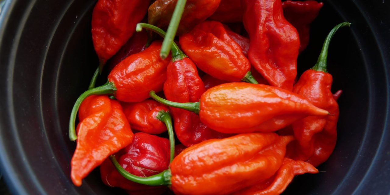 THE GHOST CHILI OR GHOST PEPPER