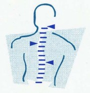 chiropractic medicare