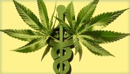 medical marijuana practice dispensary physician