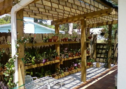Orchid Shed