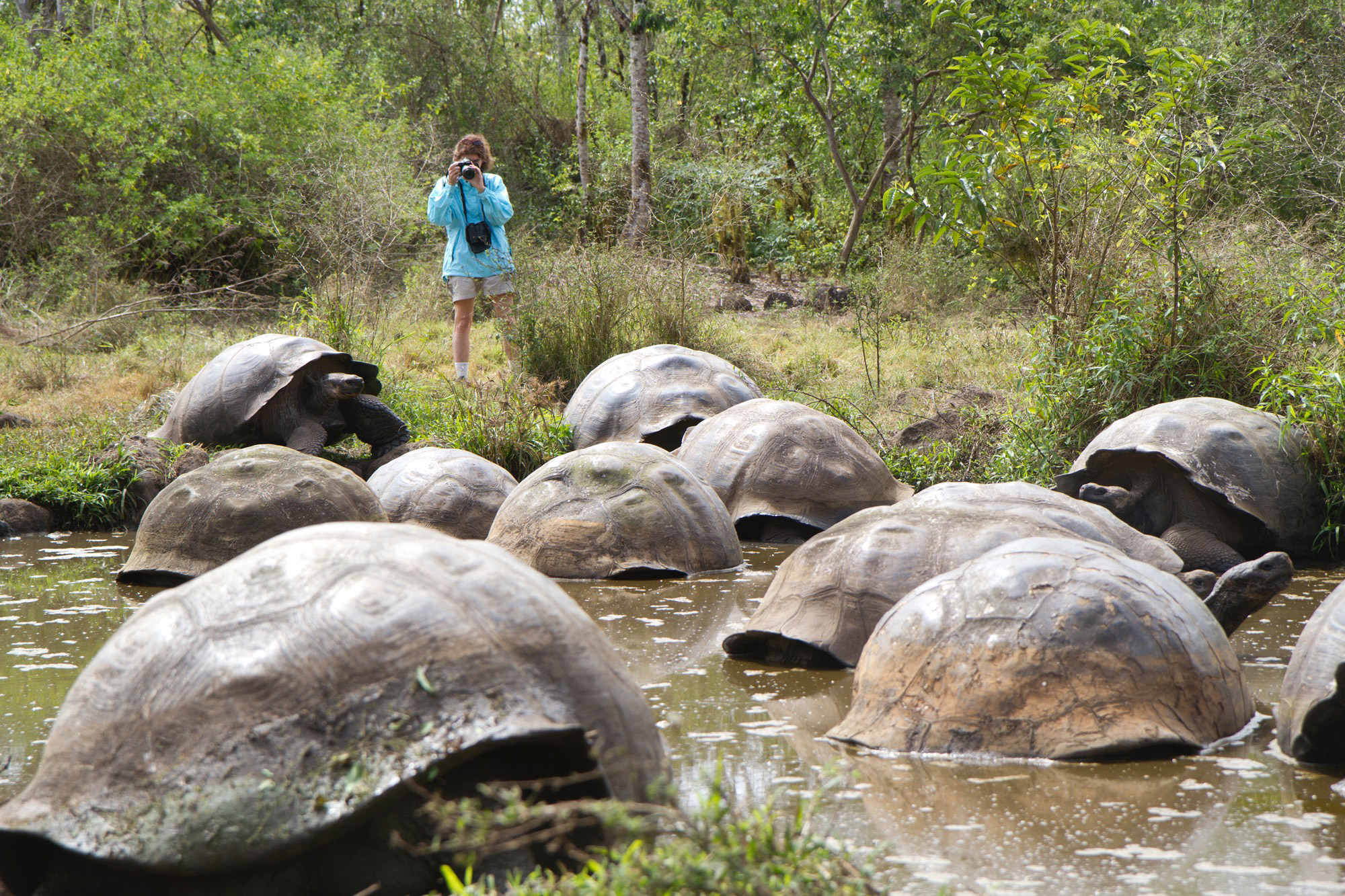 Expedition To The Galapagos Islands Florida Museum