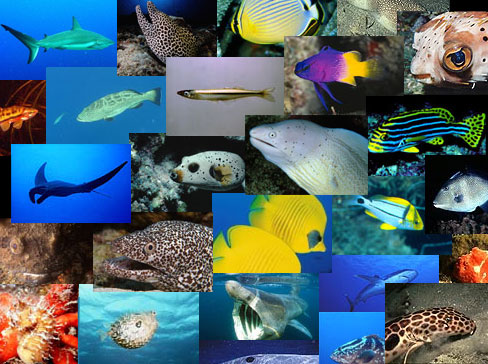 Fish Faq Discover Fishes