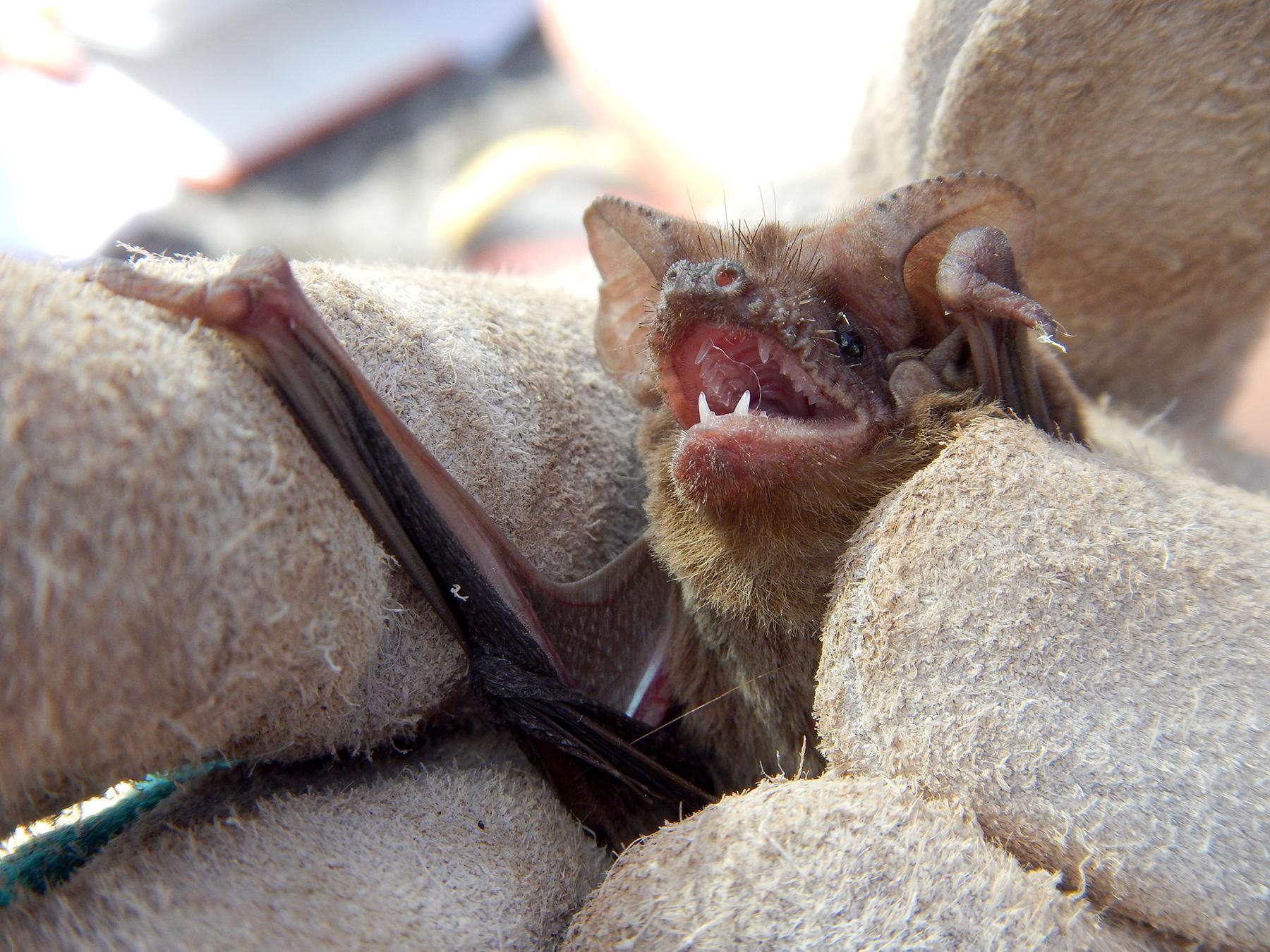 Reed Lab Evolutionary History Of Mammals Natural