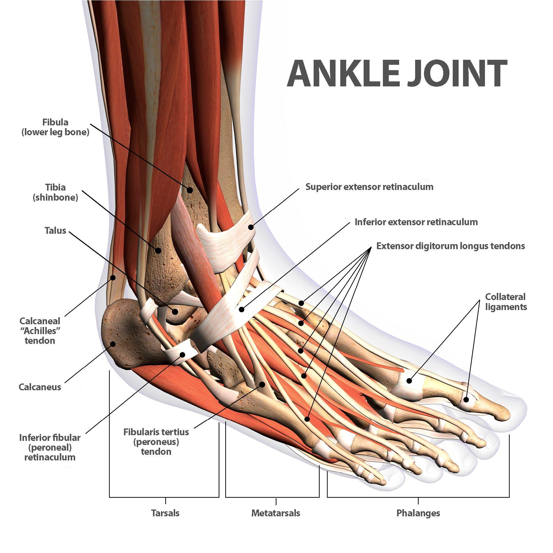 Broken Ankle Bones Involved