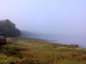 Morning fog over Myakka River State Park