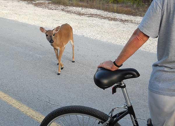 Key deer approach bike, No Name Key, Forida Keys