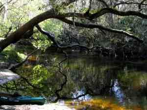 Alafia River near Lithia Springs_Park