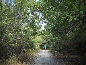Mound Key Archaeological State Park: Trail